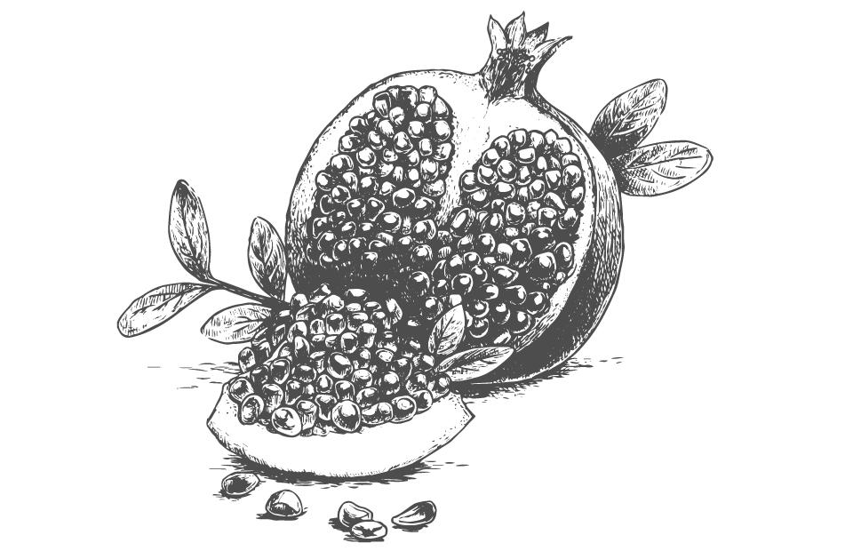 Disegno melograno bianco e nero