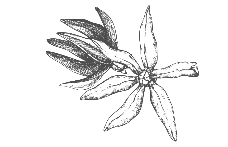 Disegno Ylang-ylang bianco e nero
