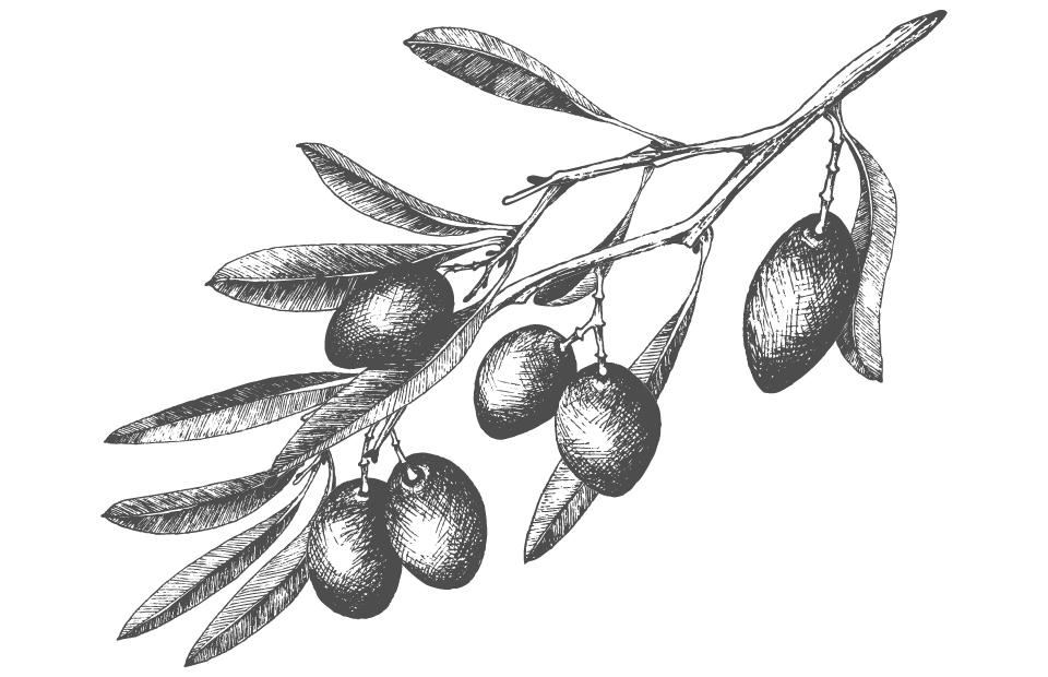 Disegno Olio di oliva bianco e nero