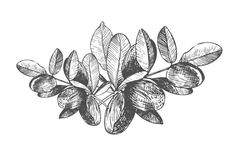 Disegno Olio di Argan bianco e nero