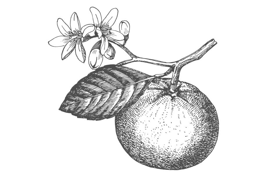 Disegno Mandarino bianco e nero