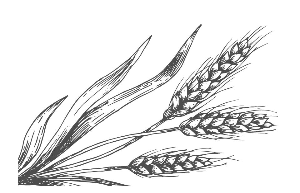 Disegno Proteine del grano bianco e nero