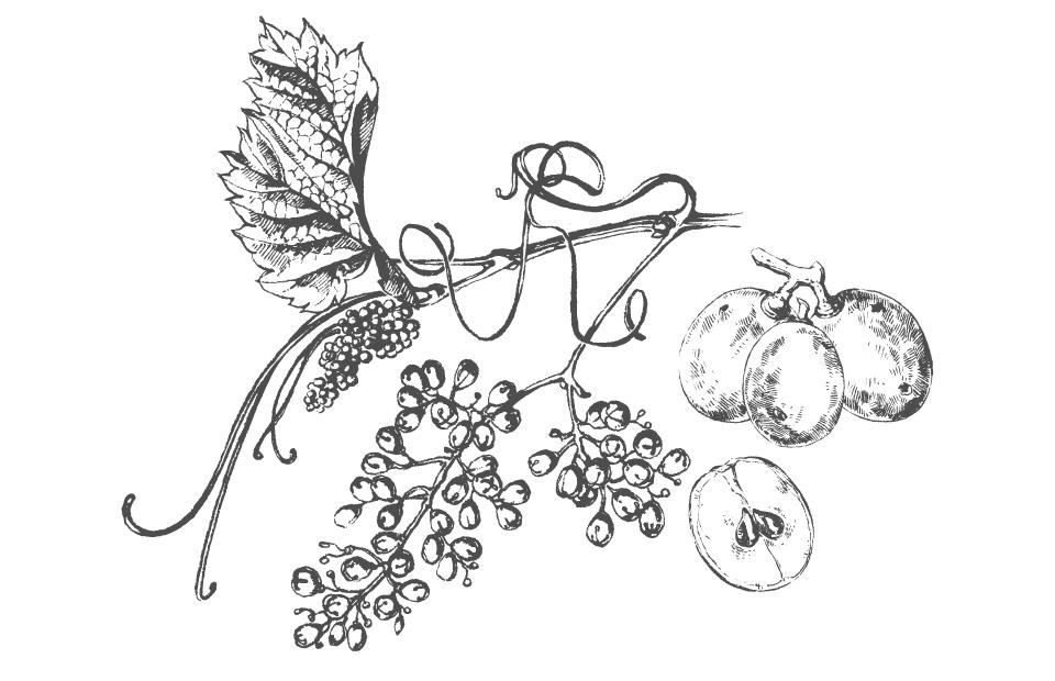 Disegno Olio di vinaccioli bianco e nero
