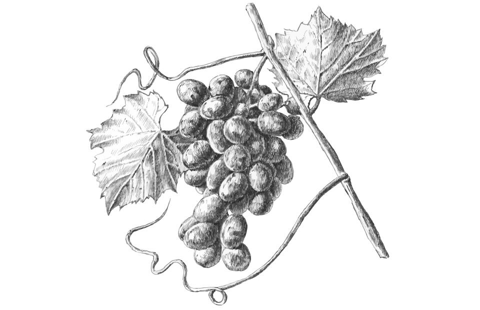 Disegno Estratto di uva rossa bianco e nero