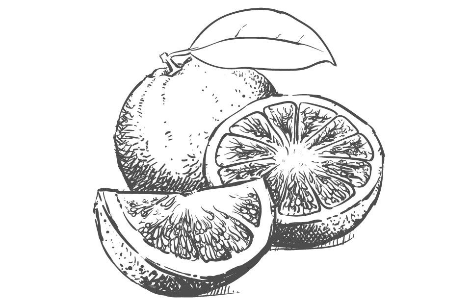 Disegno Ascorbil Palmitato Vitamina C bianco e nero