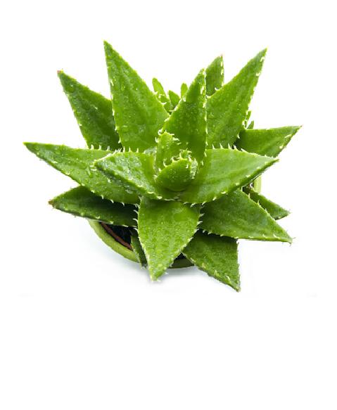 Aloe Bio