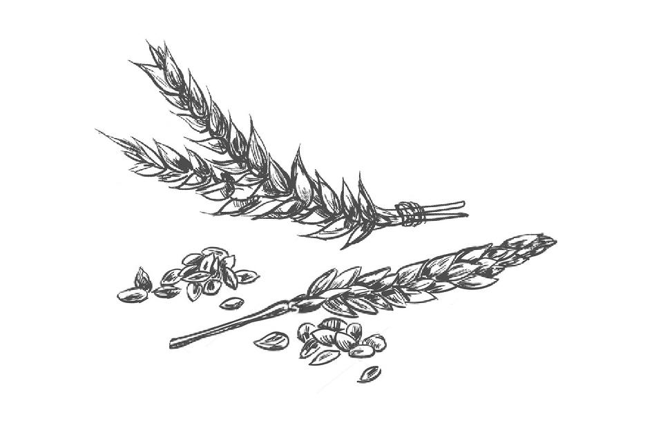 Squalene vegetale disegno