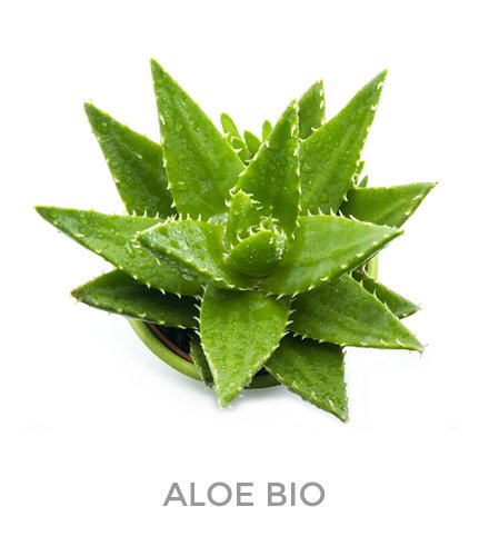 10 PAULINE srl ingredienti aloe bio 04
