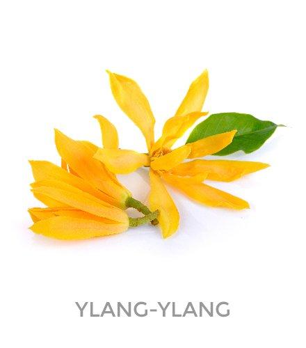 10 PAULINE srl ingredienti ylang ylang 03