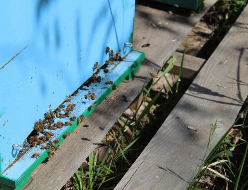 La famiglia delle api e la loro struttura